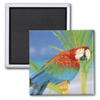 USA, Hawaii. Parrot 2 Inch Square Magnet