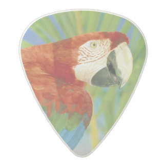 USA, Hawaii. Parrot Acetal Guitar Pick