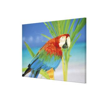 USA, Hawaii. Parrot Canvas Print