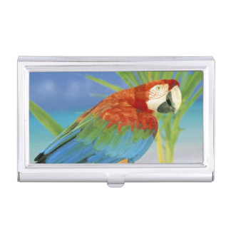 USA, Hawaii. Parrot Case For Business Cards