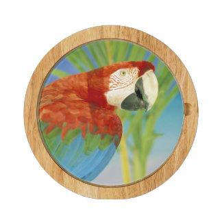 USA, Hawaii. Parrot Cheese Platter