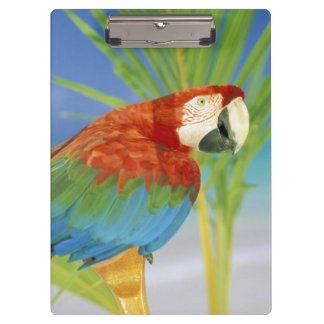 USA, Hawaii. Parrot Clipboards