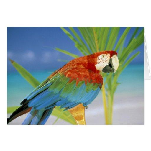 USA, Hawaii. Parrot Greeting Card