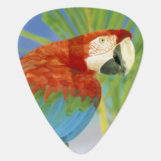 USA, Hawaii. Parrot Guitar Pick