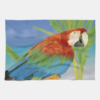 USA, Hawaii. Parrot Hand Towel