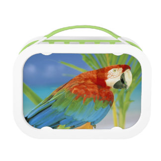 USA, Hawaii. Parrot Lunch Box