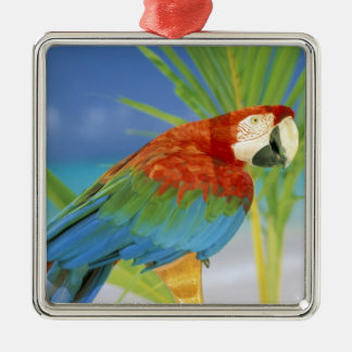 USA, Hawaii. Parrot Metal Ornament