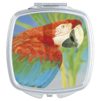 USA, Hawaii. Parrot Mirror For Makeup
