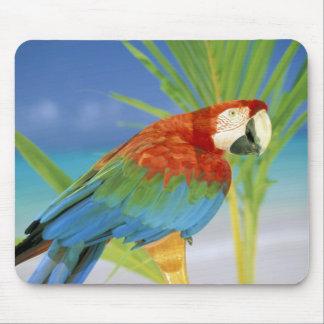 USA, Hawaii. Parrot Mouse Pad