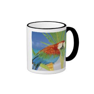 USA, Hawaii. Parrot Mug