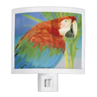 USA, Hawaii. Parrot Night Light