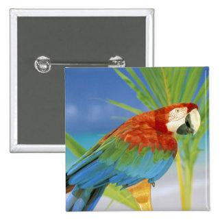 USA, Hawaii. Parrot Pinback Button