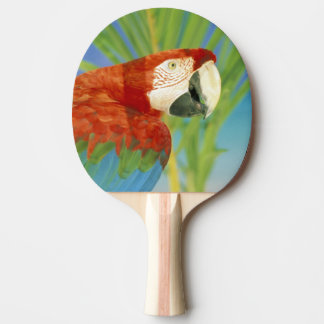 USA, Hawaii. Parrot Ping Pong Paddle