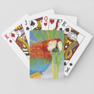 USA, Hawaii. Parrot Playing Cards