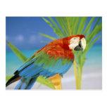 USA, Hawaii. Parrot Postcard