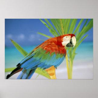 USA, Hawaii. Parrot Poster