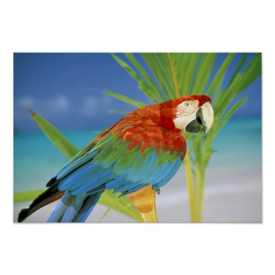 USA, Hawaii. Parrot Poster