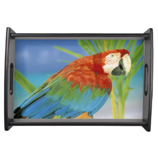 USA, Hawaii. Parrot Serving Tray