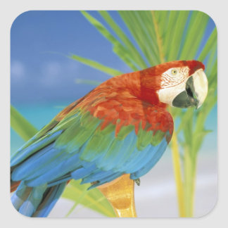 USA, Hawaii. Parrot Square Sticker