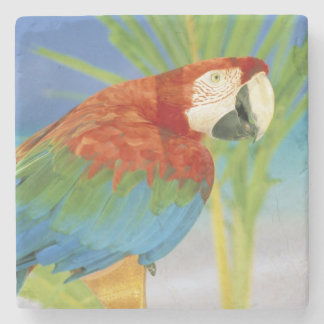 USA, Hawaii. Parrot Stone Coaster