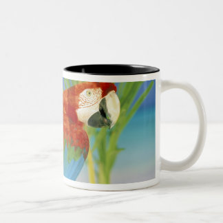 USA, Hawaii. Parrot Two-Tone Coffee Mug