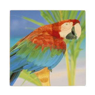 USA, Hawaii. Parrot Wood Coaster