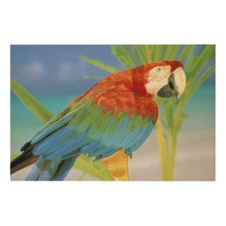 USA, Hawaii. Parrot Wood Wall Art