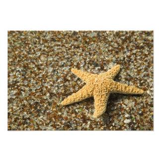 USA, HI, Kauai, Glass Beach with Star fish Photo Print