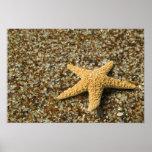 USA, HI, Kauai, Glass Beach with Star fish Print