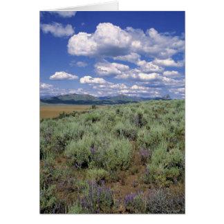 USA, Idaho, Camas Co. Sagebrush and lupine Card