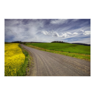 USA, Idaho, Idaho County, Canola Field Poster