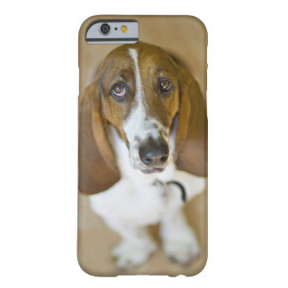 USA, Illinois, Washington, Portrait of Bassett 2 Barely There iPhone 6 Case
