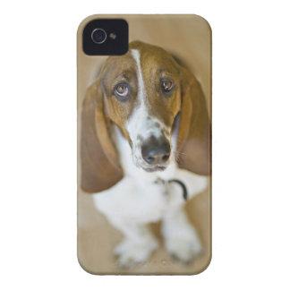 USA, Illinois, Washington, Portrait of Bassett 2 iPhone 4 Case
