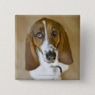 USA, Illinois, Washington, Portrait of Bassett 2 Pinback Button
