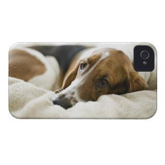 USA, Illinois, Washington, Portrait of Bassett iPhone 4 Case-Mate Case