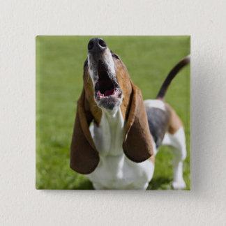 USA, Illinois, Washington, Portrait of Bassett Pinback Button