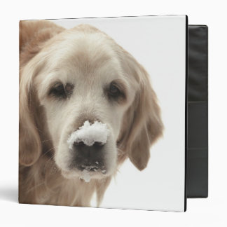 USA, Indiana, Carmel. Golden retriever with 3 Ring Binder