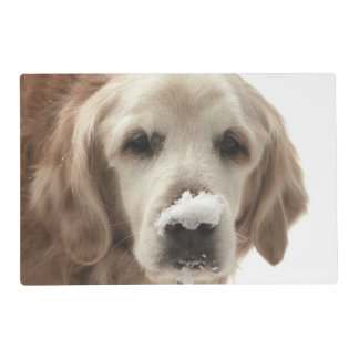 USA, Indiana, Carmel. Golden retriever with Placemat