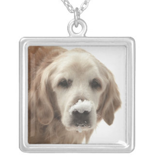 USA, Indiana, Carmel. Golden retriever with Silver Plated Necklace