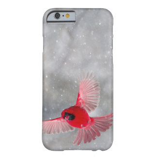 USA, Indiana, Indianapolis. A male cardinal Barely There iPhone 6 Case