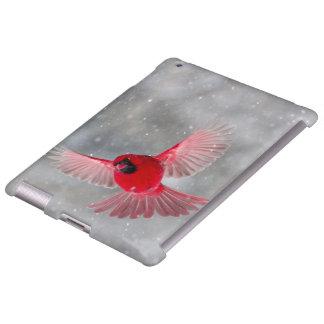 USA, Indiana, Indianapolis. A male cardinal Apple Ipad234 Case