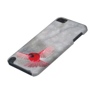USA, Indiana, Indianapolis. A male cardinal iPod Touch (5th Generation) Case