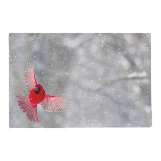USA, Indiana, Indianapolis. A male cardinal Laminated Placemat