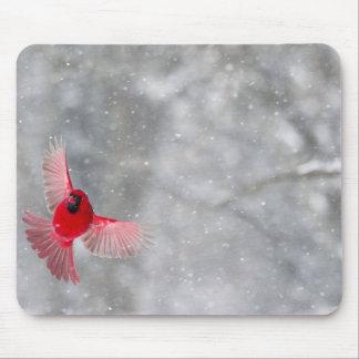 USA, Indiana, Indianapolis. A male cardinal Mouse Pad