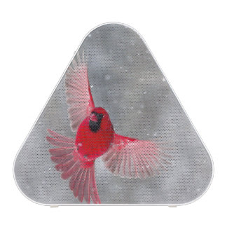 USA, Indiana, Indianapolis. A male cardinal Speaker