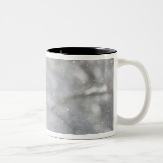 USA, Indiana, Indianapolis. A male cardinal Two-Tone Coffee Mug