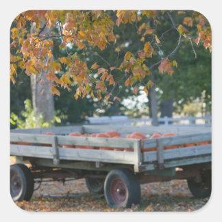 USA, IOWA, Madison County, Winterset: Howell's Square Sticker