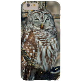 USA, Kansas. Barred Owl (Strix Varia) Barely There iPhone 6 Plus Case