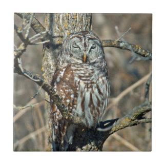USA, Kansas. Barred Owl (Strix Varia) Ceramic Tile
