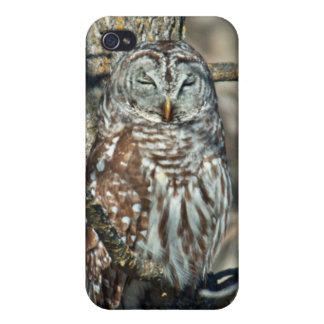 USA, Kansas. Barred Owl (Strix Varia) iPhone 4 Cover
